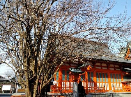 かりんの木と社殿.JPG