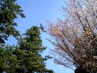 くじゅう花公園15.JPG