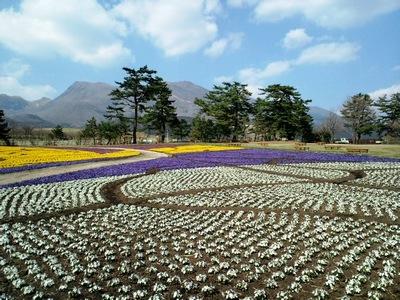 くじゅう花公園5.JPG