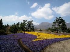くじゅう花公園6.JPG