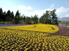 くじゅう花公園7.JPG