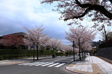 桜 �A.JPG