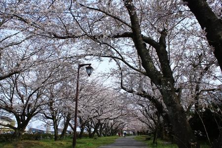 大貞公園�B.JPG