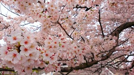 大貞公園2014.03.31.jpg