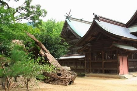 社殿と御神木.JPG