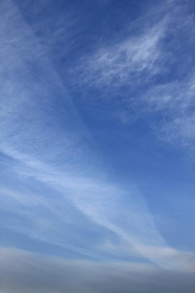 絹雲.JPG