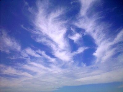 an angel's wing.JPG